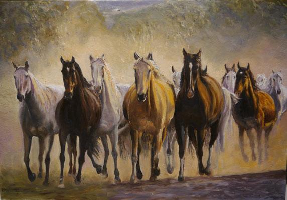 Paarden , Frans Boers