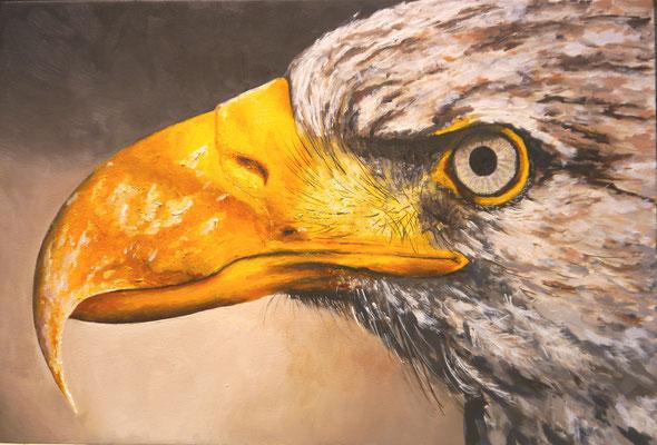 Roofvogel, Frans Boers