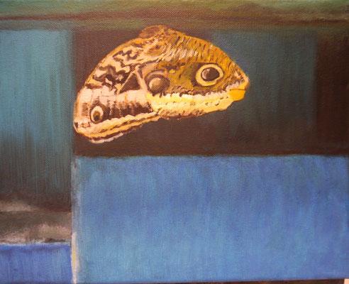 Vlinder, Anet van Hulst