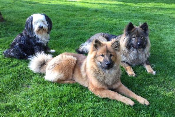 Josie mit Biella und Bijou