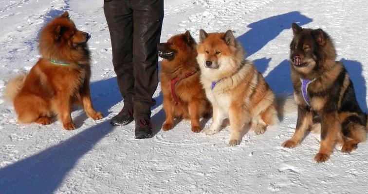 Avito, Ari, Ayla und Lotte