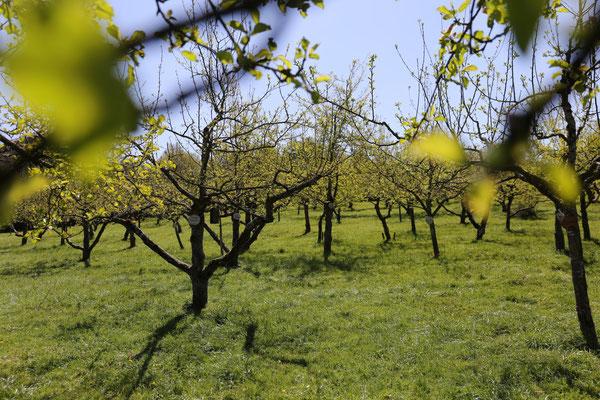 Der Hermannsgarten im Frühling