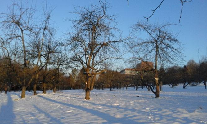 Winterzauberlicht im Hermannsgarten