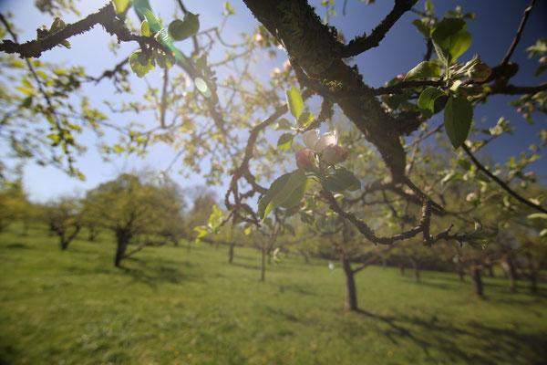 Frühling! Sonne! Freude!