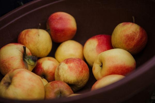 Leckere Äpfel!