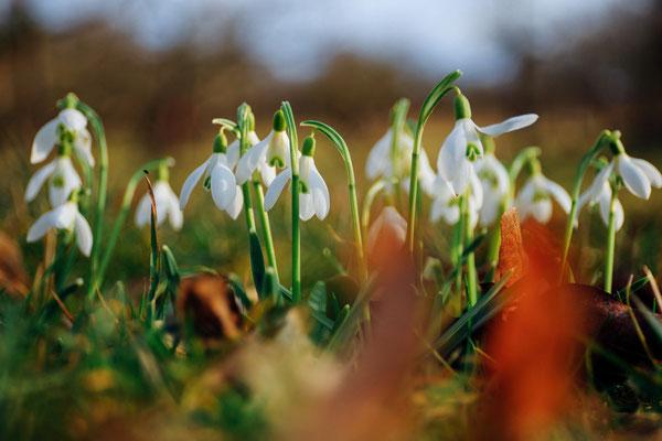 Frühlingszauber nach einem langen Winter