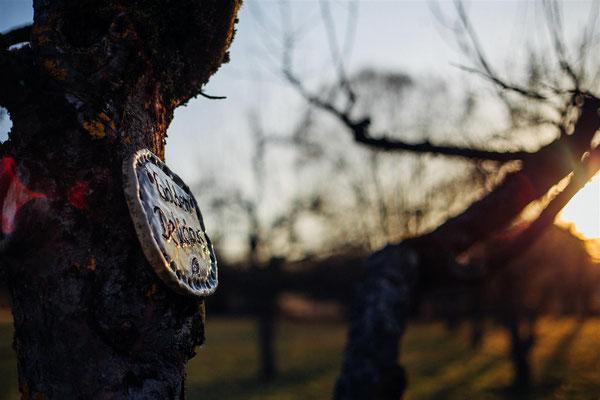 Tontafeln an den Bäumen zeigen die Obstbaumsorte an