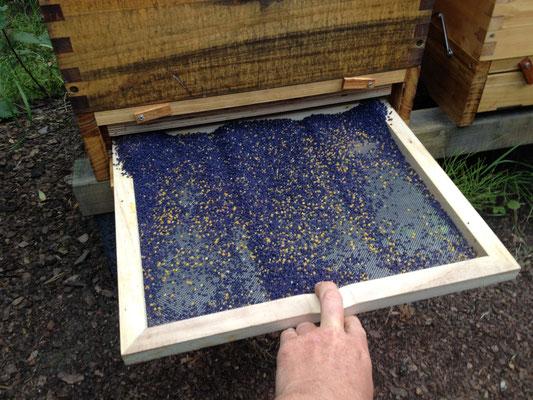 Der Pollen wird mit sogenannten Pollenfallen geerntet