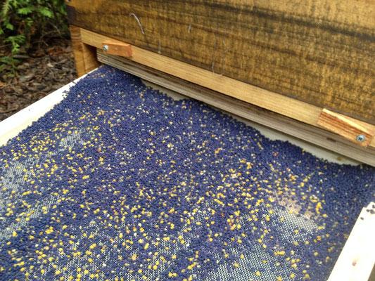 Jeden Abend wird der Pollen von uns eingesammelt