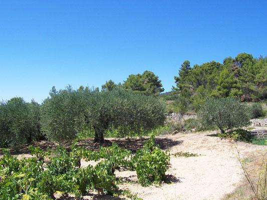 Balade au coeur des vignes en Corbières