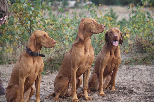 Lulu, Indy en Juul