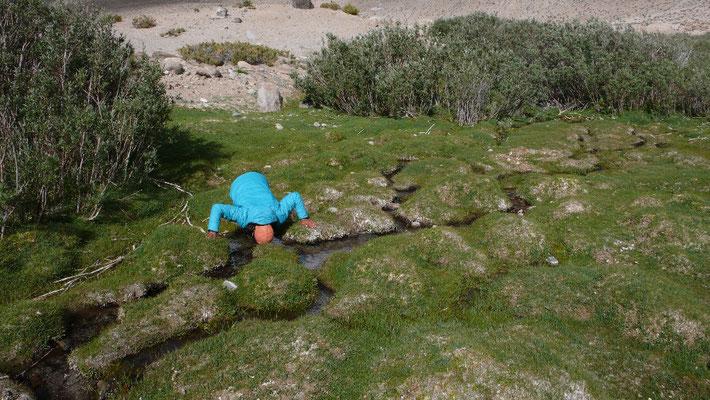 Überall kommen kleine Bächlein zwischen den Büschen hervor. Ralf gönnt sich einen Schuck Wasser direkt an der Quelle
