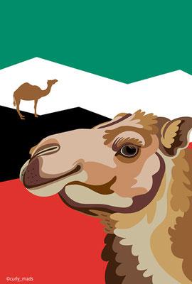 Kuwait:Arabian camel