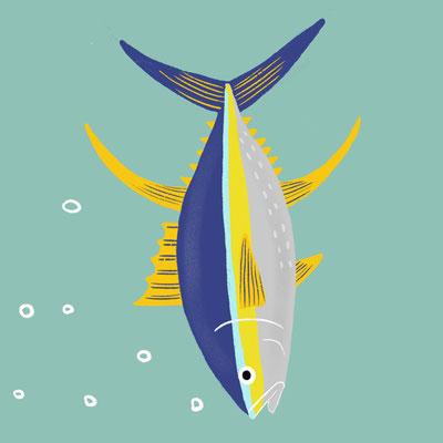 ALPHABET_Y  [ Yellowfin Tuna ]