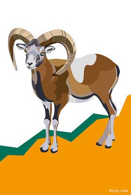 Cyprus:Cypriot mouflon