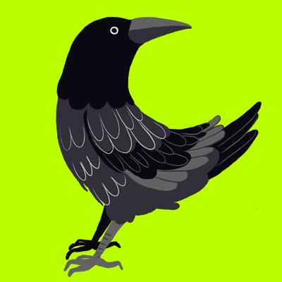 ALPHABET_C [ crow]