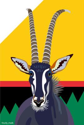 Zimbabwe:Sable Antelope