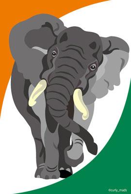 Cote d'Ivoire:African Elephant