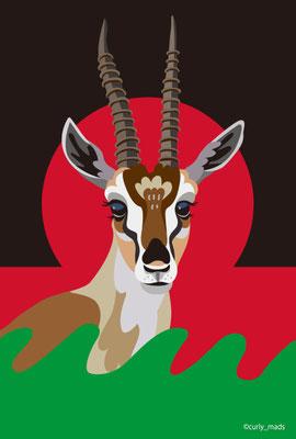 Malawi:Thomson's Gazelle