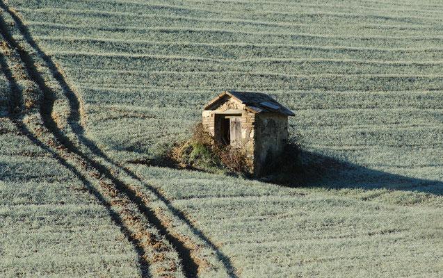 Campo tra San Piero e il Trebbio