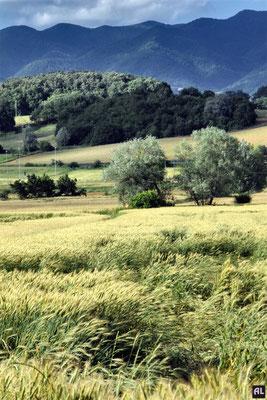 Campi nei pressi della pista ecoturistica (Borgo San Lorenzo)