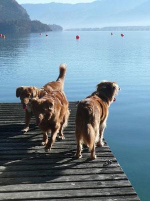 Das Tollerteam am Wolfgangsee