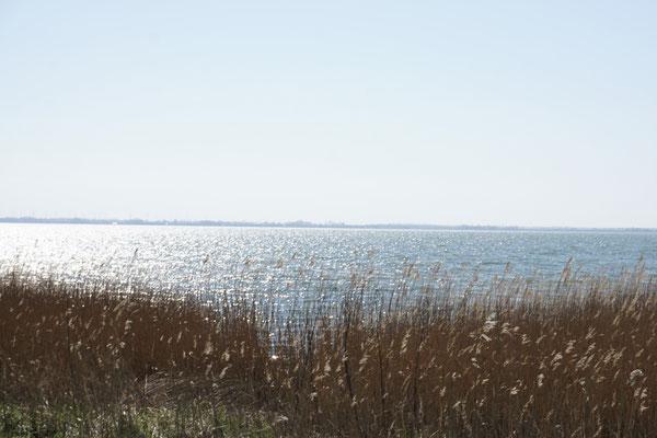 Zwischen Meer und Bodden . Fischland Darß, Bodden...NIE GENUG!