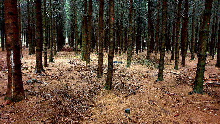 The the Bois Jacques Wood today