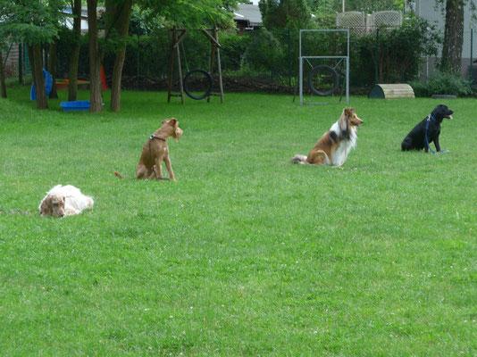 Hunde warten in Reihe