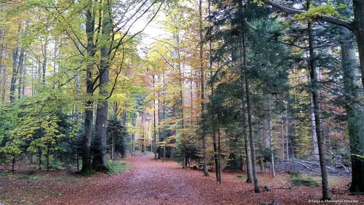 Wanderweg zur Grünhütte im goldenen Herbst