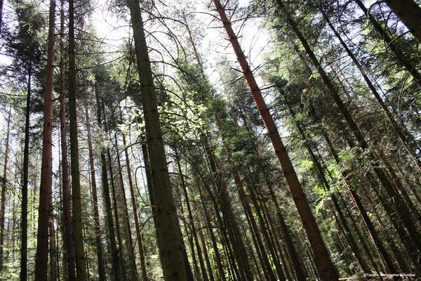 Wanderweg zum Riesenstein Bad Wildbad