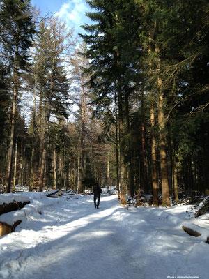 Winterwanderung auf dem Sommerberg Bad Wildbad