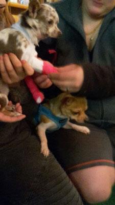Erste Hilfe beim Hund - Pfotenverband auch für die Kleinsten