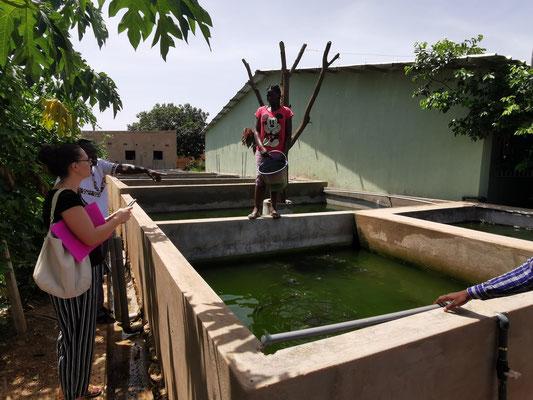 Bei einem Rundgang durch das Ausbildungszentrum bekamen wir einen Eindruck der vielen verschiedenen Metiers, die hier erlernt werden können. Die Fischzucht ist eines davon.