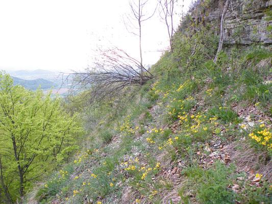 Bergsturz Plessefelsen Frühjahrsaspekt