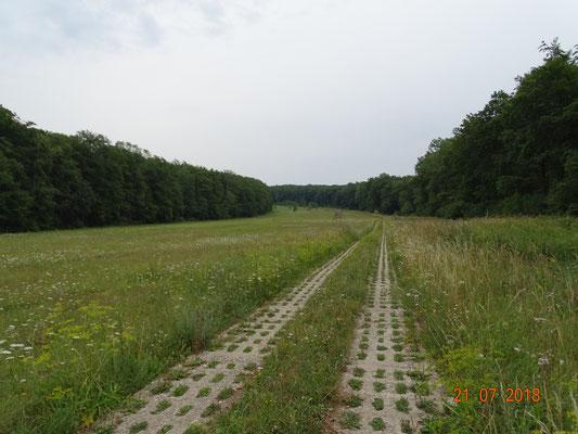 Grenzstreifen bei Rittmannshausen