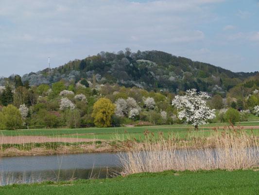 Frühling bei Bad Soden Allendorf