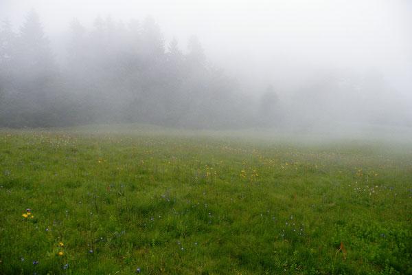 Meißnerwiese , oft in Wolken
