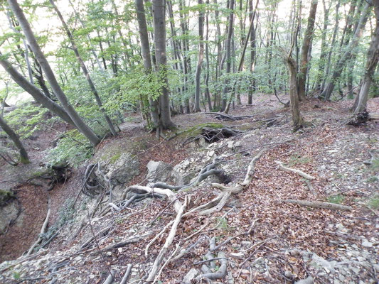 Risse und Spalten im Kalkbuchenwald oberhalb Bergsturz
