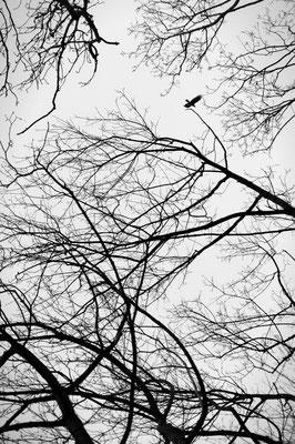 Wald Zweige Rabe Vogel Mystisch Zen Mecklenburg Vorpommern Minimalismus minimalistische Fotografie Heimatlicht Felix Lachmann