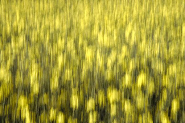 Abstrakte Fotografie minimalistische Minimalismus Mecklenburg Vorpommern Raps Ostsee Urlaub Kunst Print Fineart Felix Lachmann Heimatlicht ICM Zen