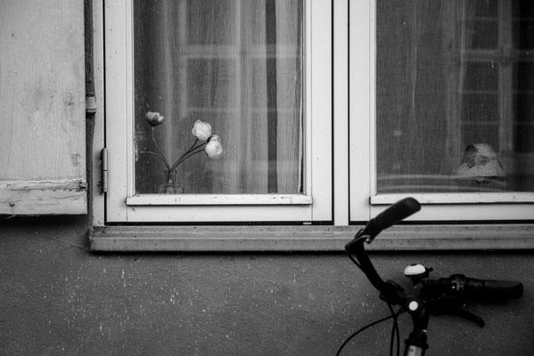 Hansestadt Stralsund Stillleben Stilleben Fenster Mecklenburg Vorpommern Minimalismus minimalistische Fotografie Heimatlicht Felix Lachmann