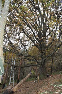 Baumhausbau, setzen der 4 Pfeiler