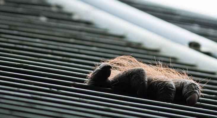 Hand eines Orang Utans am oberen Gitter
