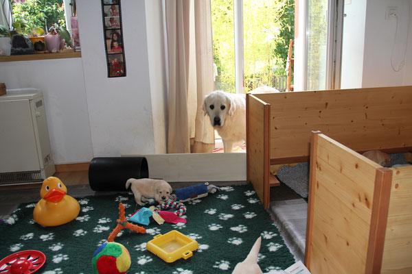 Ferienhund Alette sind die Welpen etwas suspekt...