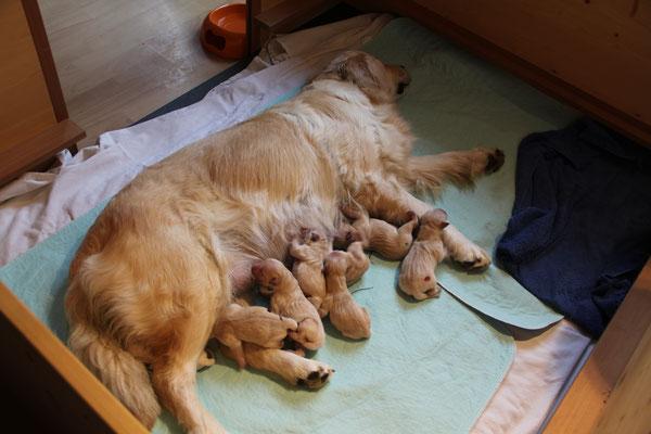 Kurz nach der Geburt, die Kleinen sind noch nicht ganz trocken und haben rosarote Näschen.