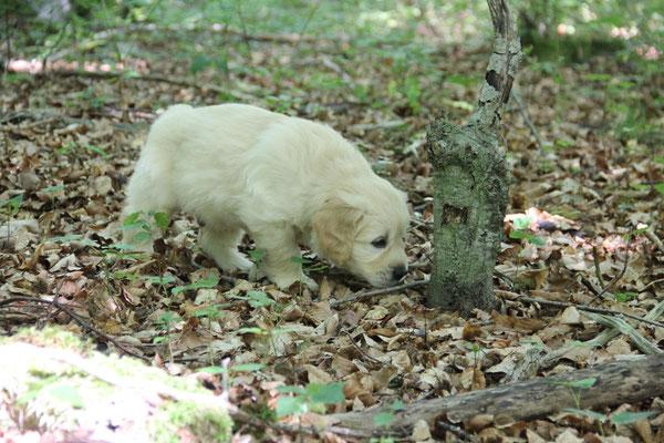 spannend im Wald