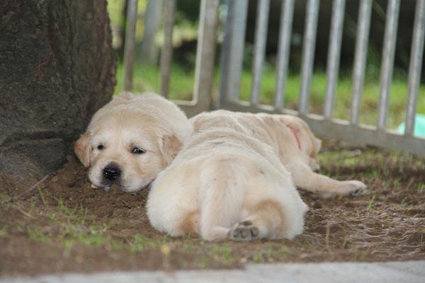 müde.