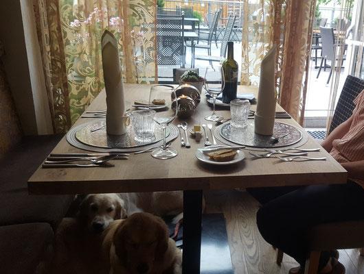 Im Speisesaal wo die Zweibeiner fein essen sind wir natürlich ganz brav, wenn wir ja auch dabei sein dürfen.