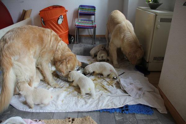 Anschliessend dürfen Mama Luna und Oma Nita die Reste wegputzen.